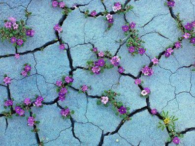 cracks2